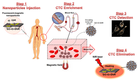 Step1. Nanoparticles injection : fluorescent-magnetic nanoparticles : IO, GNR, GO-IO-GNR | Step2. CTC Enrichment : blood flow, Magnetic field, Circulating tumor cell(CTC), GO-IO-GNR, Blood flow, NIR laser, Heating, GO-IO-GNR, Step3. CTC Detection, Step4. CTC Elimination